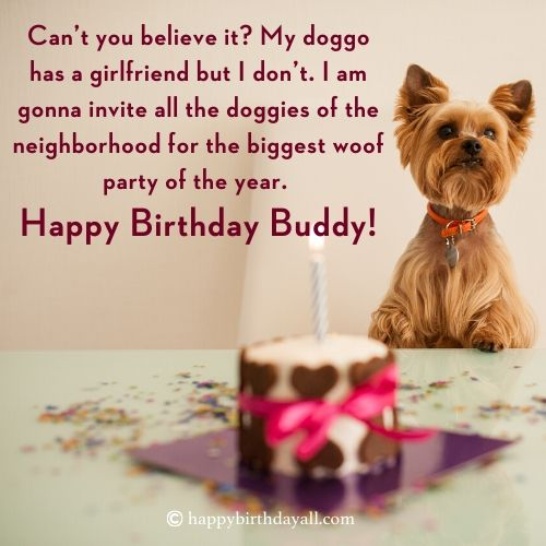 happy birthday funny wishes for dog