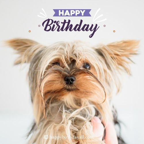 happy birthday wishes for dog lovers