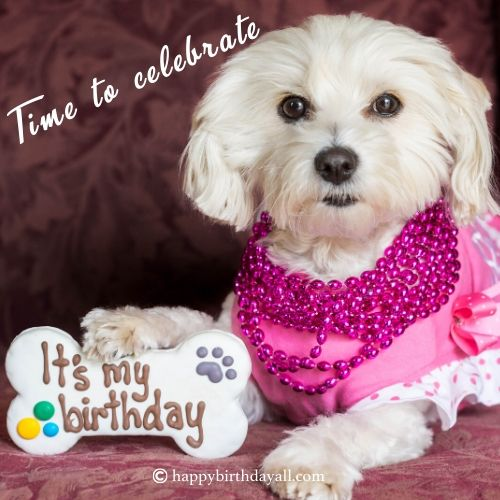 birthday wishes with dog picture