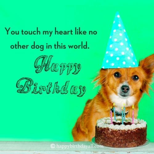 birthday wishes with dog images