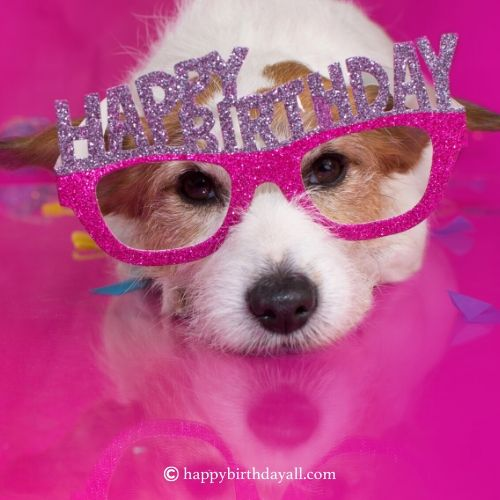 birthday wishes for dog quotes