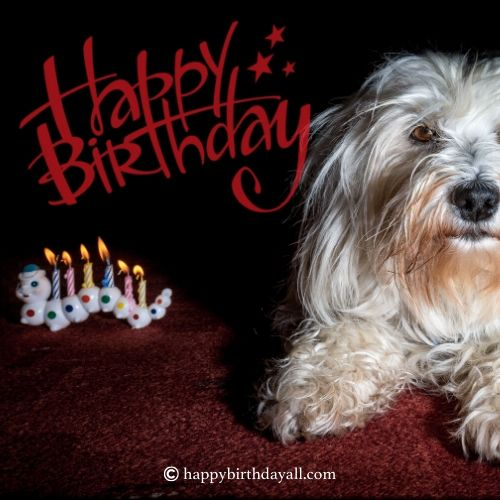 Cute Birthday Wishes for a Dog
