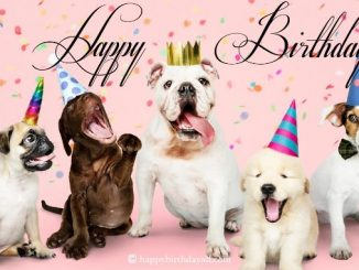 Super Cute Birthday Wishes for a Dog with Pictures