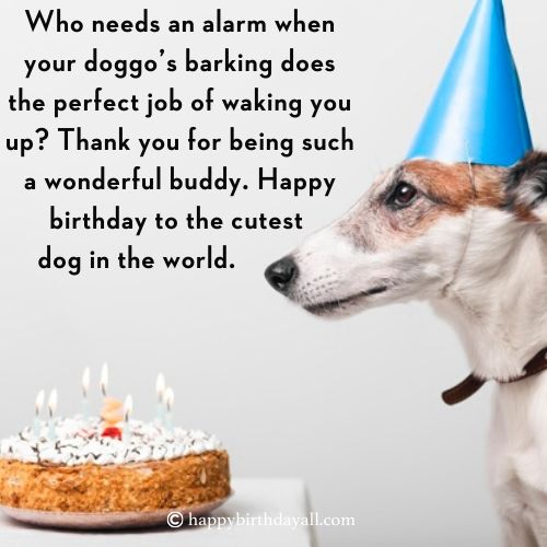 Happy Birthday Messages for Dogs