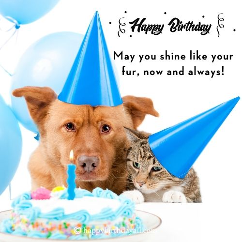 Cute Birthday Messages for Dogs