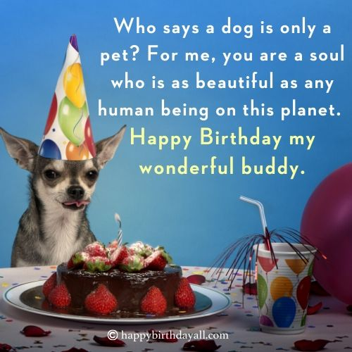 Lovely Happy Birthday Quotes for Dogs