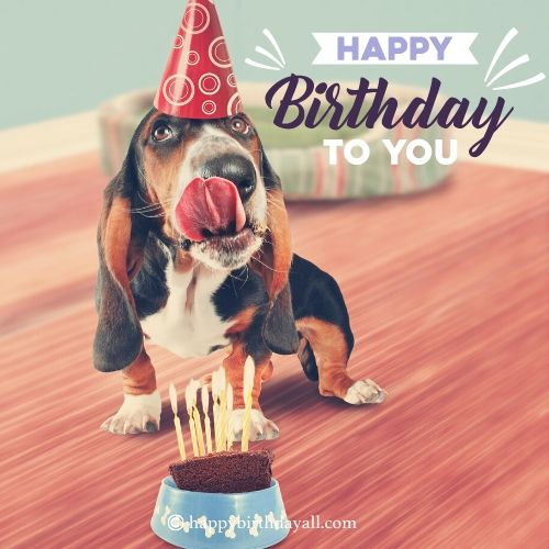 Lovely Birthday Quotes for Dogs